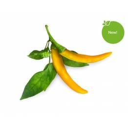 Click and Grow Smart Garden Refill 3-pack - Yellow Chili Pepper
